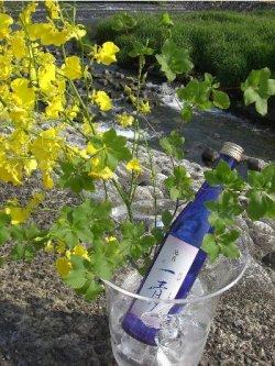 画像1: 池月 純米吟醸 一青(ひとと) 能登の地酒